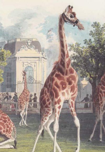 Giraffe Wien Vienna Bieder Maier
